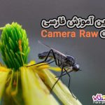 Camera Raw
